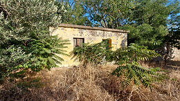 For sale in Psinia Eressos Lesvos a house of 27 sqm with an estate of 2500 sqm olive trees