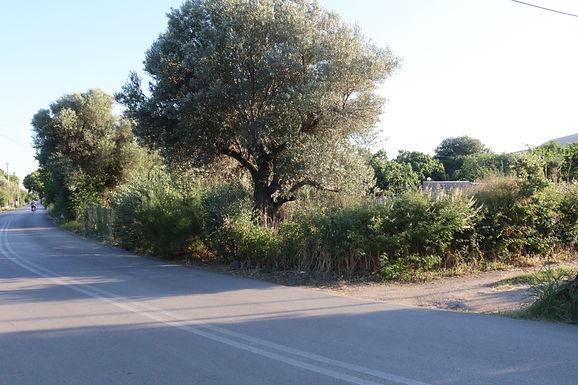 Land for sale on the provincial road of Eressos to Skala Eressos