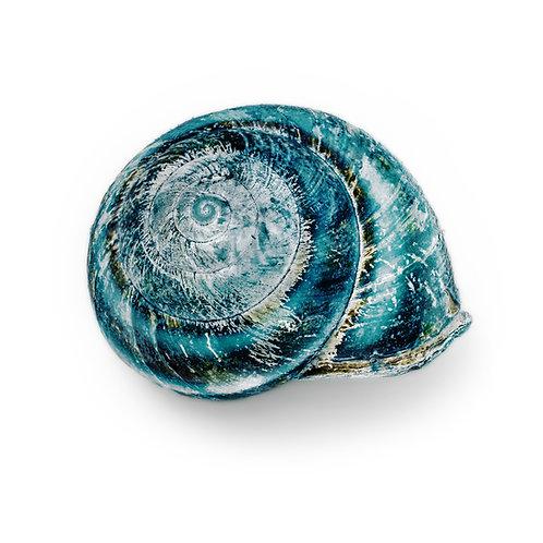 Blue Shell 16 x 20 inch
