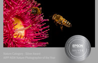 Gum Blossom with Honey Bees - Silver Award 2018