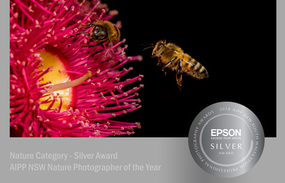 Bee with Blossom - Silver Award 2018