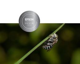 Silver Award Aipp NSW Epson 2016