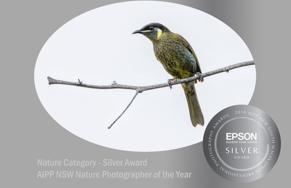 Lewins Honeyeater Silver Award 2018