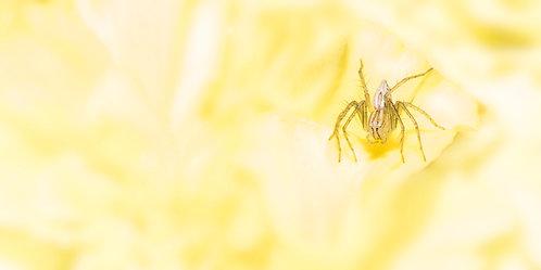 Flower Petal Spider 12 x 18 inch