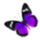Fuchsia and Purple Butterfly