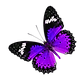 Small Fuchsia and Purple Butterfly
