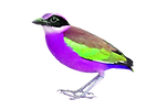 Bright Colored Bird standing