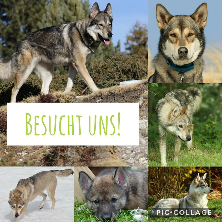 Messe Mein Hund in Mannheim