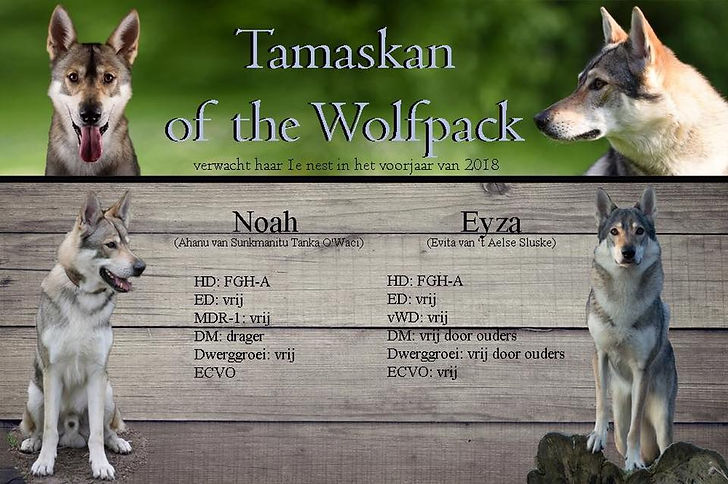 Tamaskan of the Wolfpack