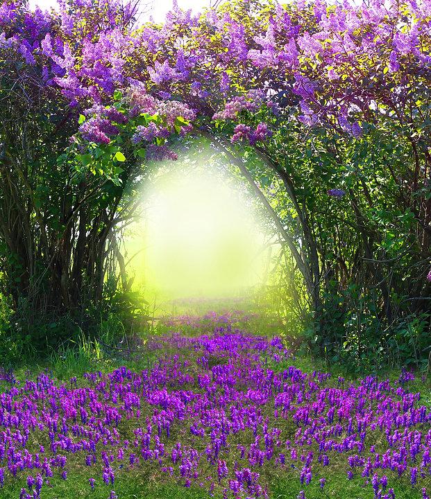 Magic spring forest .jpg