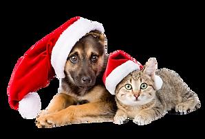 christmas-pets-getty-ali-siraj-1-5df1ad5