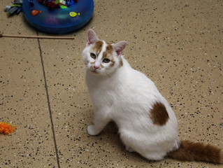 Scarlett the Cat: Superior to Scarlett Johansson
