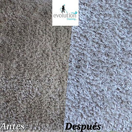 Area carpet cleaning. We do pick up and delivery service.