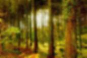 woodland scene.jpg
