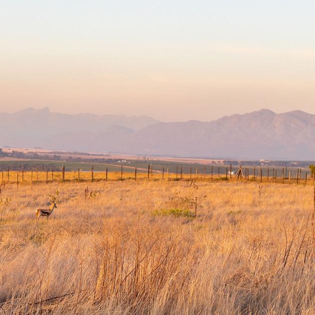 Springbok Camp