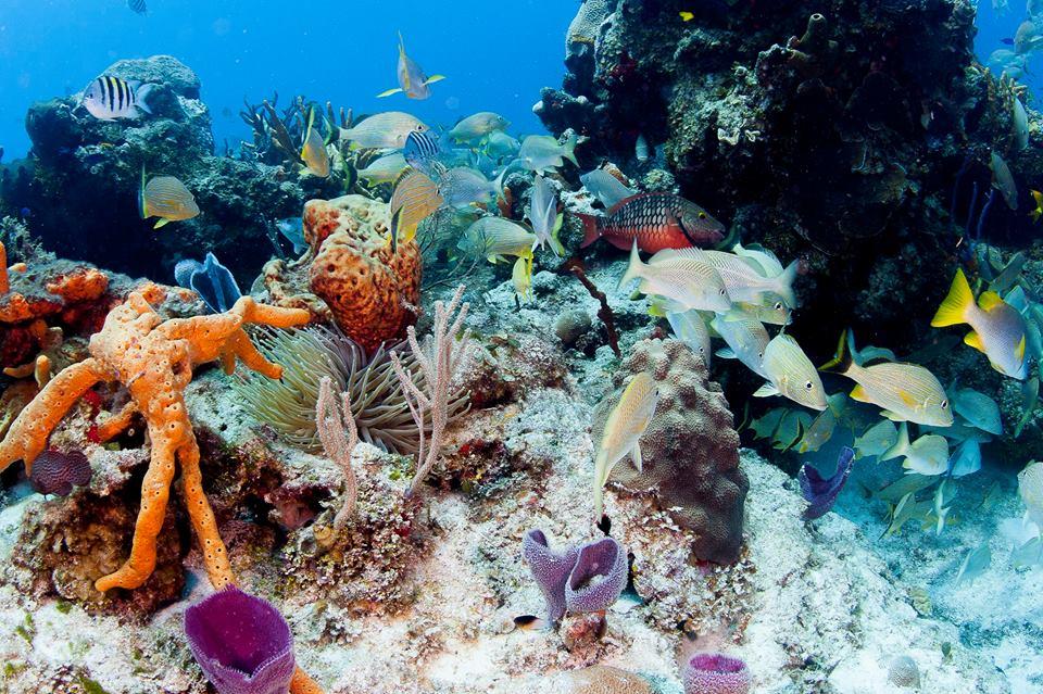 Playa del Carmen ocean dives