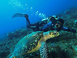 Ocean dives