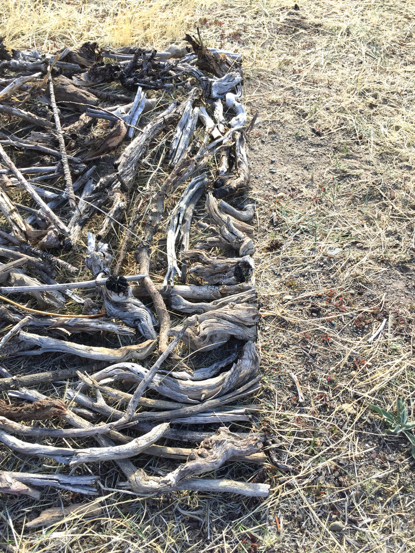 cuadrado de ramas