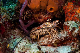 Reefs in Cozumel dive sites