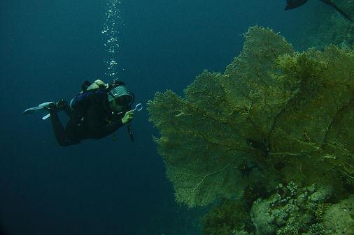 reef diving.jpg