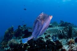 ocean dives mx scuba