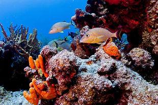 Best dive sites Cozumel