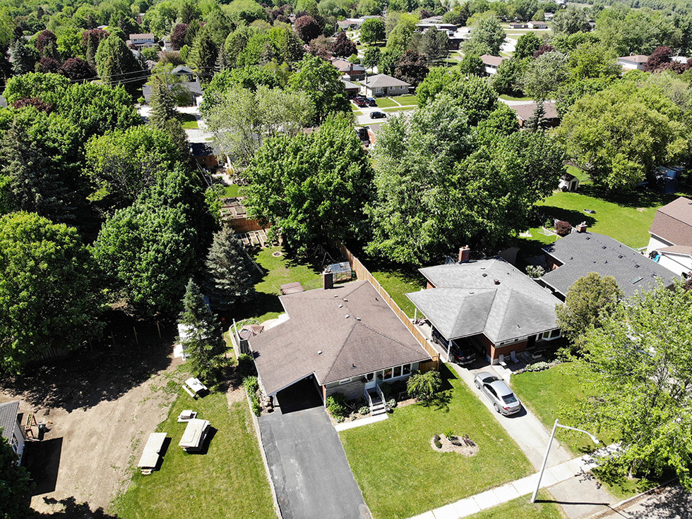 From Above 2 - 1 Tanager For Sale