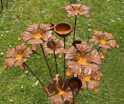Wind Flower/Cups