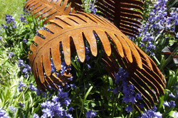 Rusty Garden Ferns