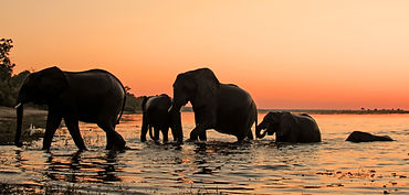Elephant silhouettes against a sunset at