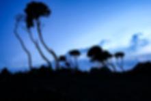 Tree Silhouette at Sunset. Shira Camp- M