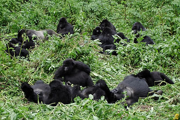 Big Mountain Gorilla Family.jpg