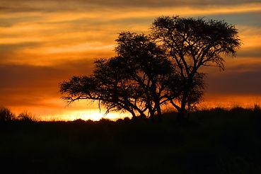 African Safari at Sunset