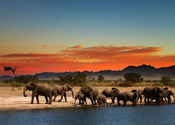 Herd of elephants in african savanna at