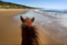 Horseriding on beach - landscape view fr