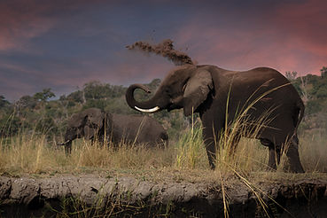 Sand shower, Elephant Chobe river - Bots