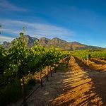 Stellenbosch Vineyards.jpg
