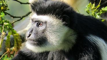 Wildlife of Tanzania.jpg