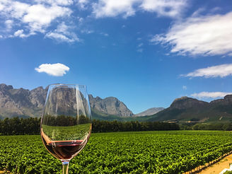 Franschhoek wine tasting in the Western