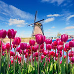 Traditional Dutch windmills from the can