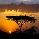Sunset And Acacia Tree In The Serengeti,
