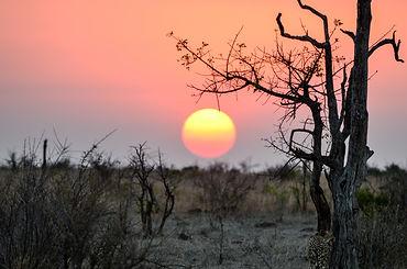 A beautiful sunset seen at Mala Mala Res