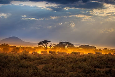 Migration of elephants.jpg Herd of eleph