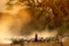 shepherd leading a flock of goats .jpg