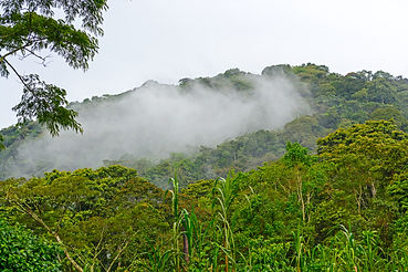 Cloud Forests in Bwindi Impenetrable Nat