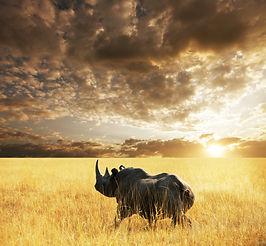 rhino  in Etosha Park.jpg