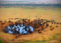 Buffalo at the source .jpg