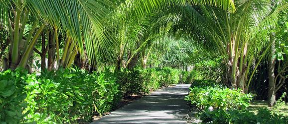 InterContinental Bora Bora Resort & Thalasso Spa Grounds