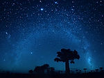 Starry sky and baobab trees. Blurred sky