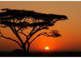 Sunrise tree Serengeti